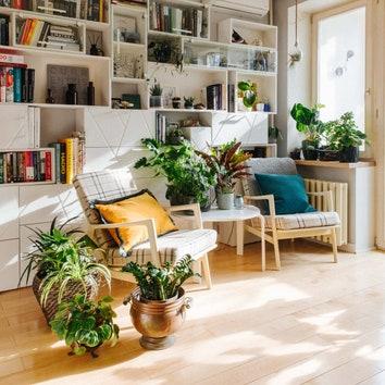 Топ-10 растений для улучшения воздуха в квартире