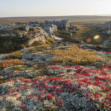 Паблик недели: красоты северной природы в группе ● sever