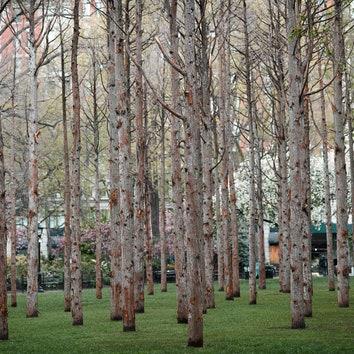 """Призрачный лес"" в центре Манхэттена"
