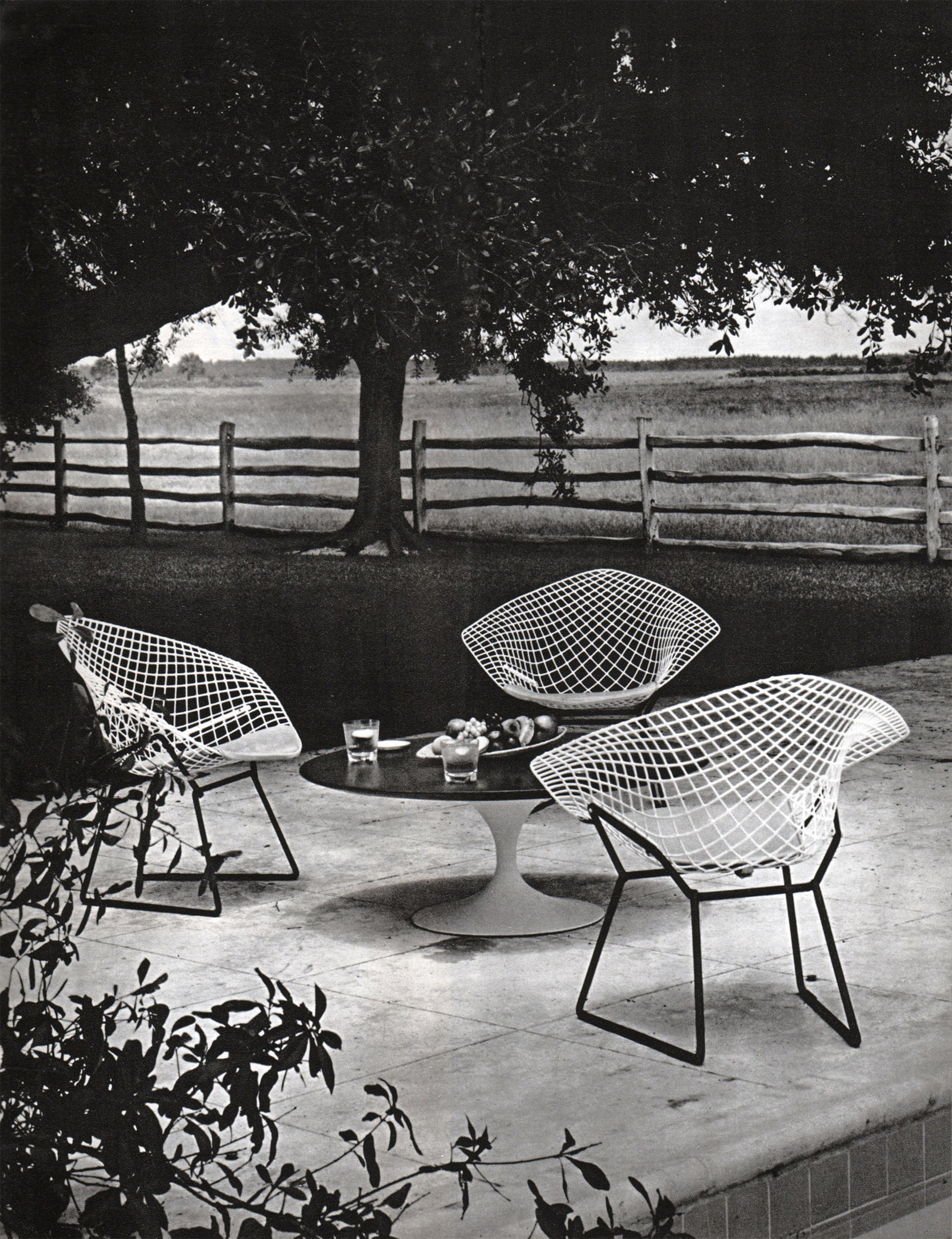 Diamond no 22      Tulip     Knoll.  La Maison franaise   1961 .