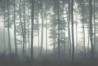 Mystic Fog Hygge Wall.