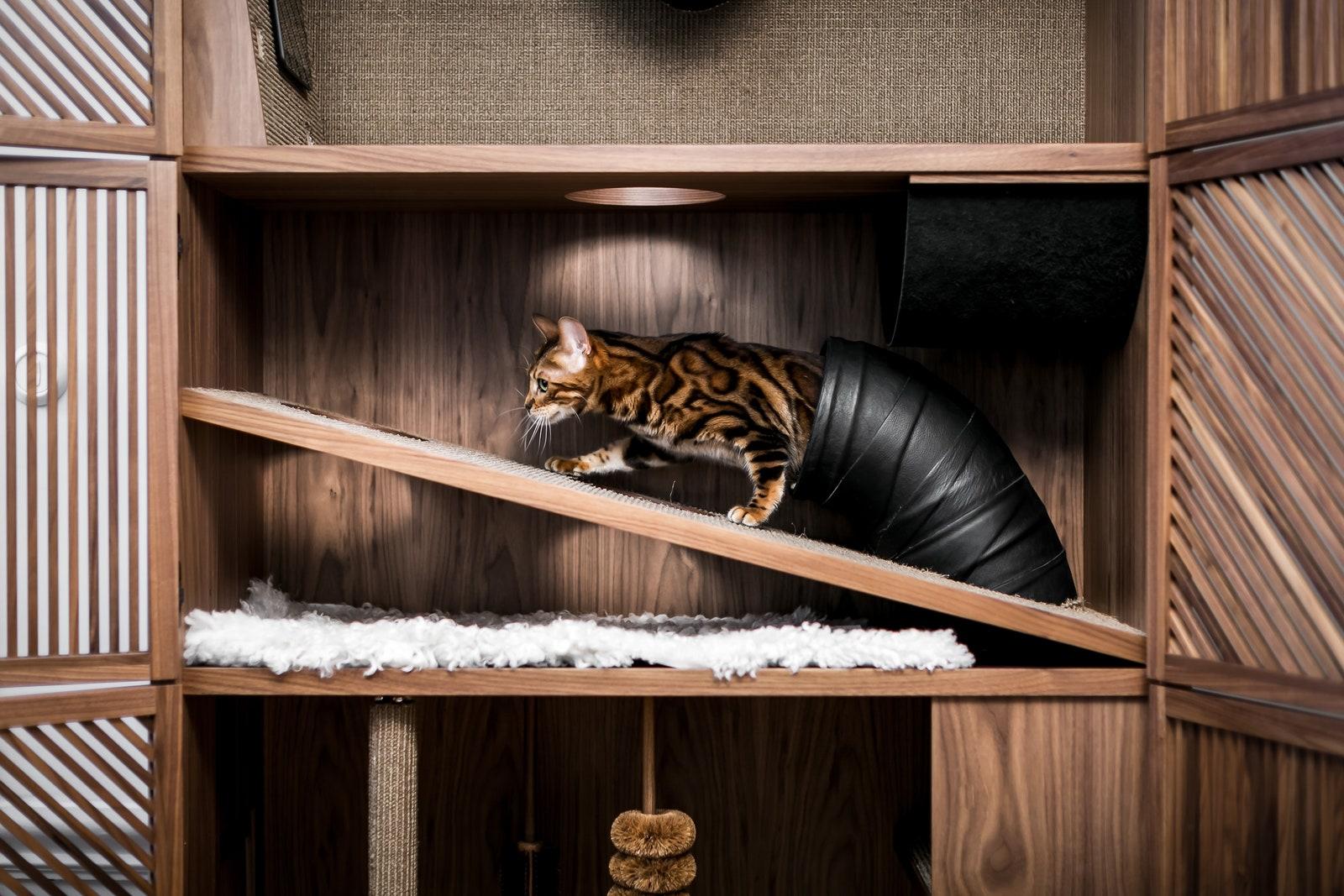 Cat Flat     24Storage