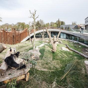 Дом для панд по проекту бюро BIG