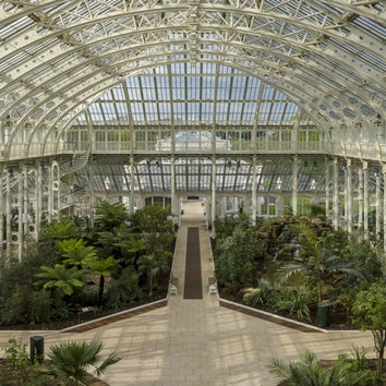 Королевские ботанические сады Кью снова открыты для посетителей