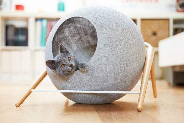 . httpsadmagazine.rumebel80408catshouse.php